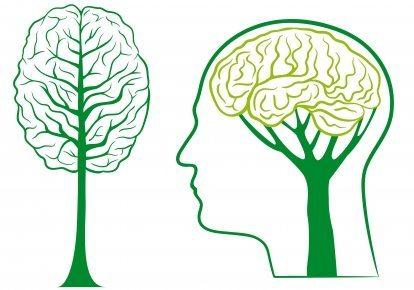 stockfresh_id408794_green-brain-tree-vector_sizeXS