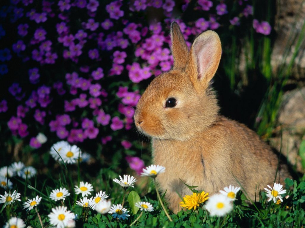cute_easter_bunny_photo