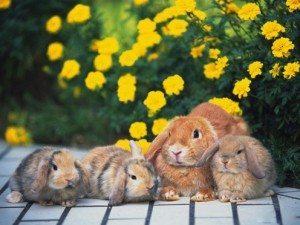 rabbit66_1024x768