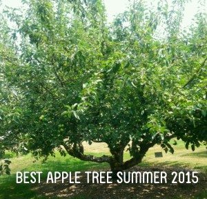 "The BEST ""adopted"" apple tree located in the Curran Apple Orchard Park in University Place, WA."