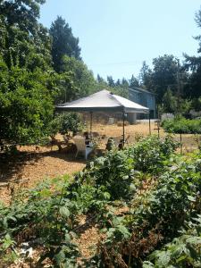 A spot of shade on sunny Victory Farm.