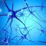 Ingredients for Neuroplasticity: Curiosity, Creativity, Tenacity